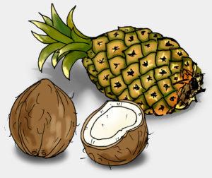 Ananas und Kokosnuss, Illustration (Quelle: Angela Richter)